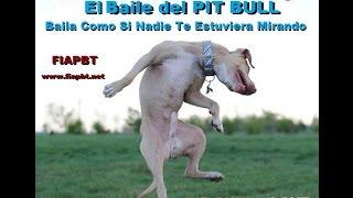 EL BAILE DEL PIT BULL DANCING