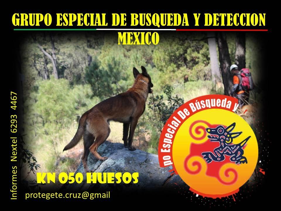 perros de busqueda y rescate protegete