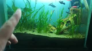 Почистил аквариум на работе.