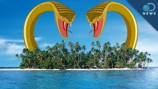 3 Islands Overrun By Crazy Animals