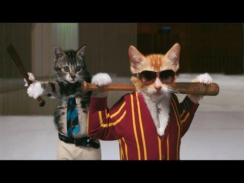 Котята смешно дерутся. Игра Престолов: начало. Chats drôles. Смешные коты 2016. Funny cats 2016.