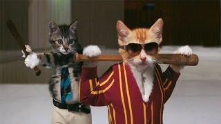 """Котята смешно дерутся. """"Игра Престолов: начало"""". Chats drôles. Смешные коты 2016. Funny cats 2016."""