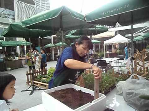 วิธีการปลูกผักบุ้งอย่างง่าย