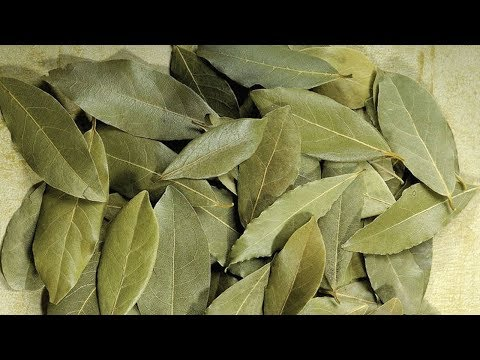 17 Best Benefits Of Bay Leaf (Tej Patta) For Skin, Hair And Health.