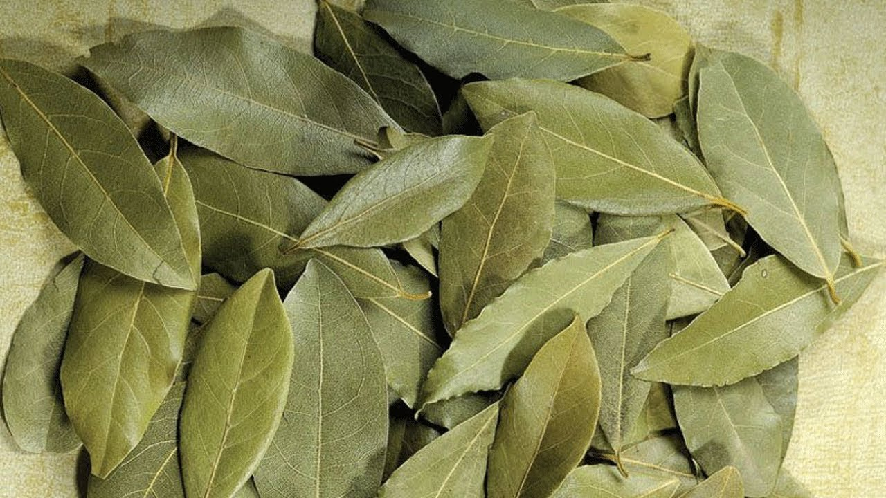 17 Best Benefits Of Bay Leaf Tej Patta For Skin Hair And Health Youtube