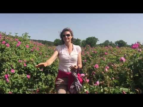 La Vie En Rose - Isparta Turkiye