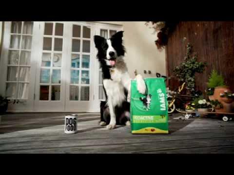 GardeningEssentials.co.uk - 3kg Iams Dog Food equivalent to over 37 tins of wet food!