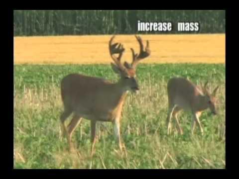 Grow Bigger Deer Racks! - Bag Bigger Bucks - RAKS Mineral
