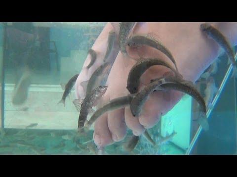 Ictioterapia o peeling natural con el pez Garra rufa o doctor pez.