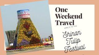 SHINAN Tulip Festival (신안 튤립축제…