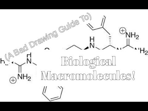 (A Bad Drawing Guide To) Biological Macromolecules
