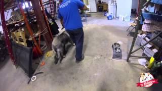 Aggressive Angry Dog Training