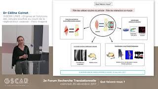 """Équipe """"Origines et fonctions des cellules souches au cours de la régénération osseuse"""" (déc. 2017)"""