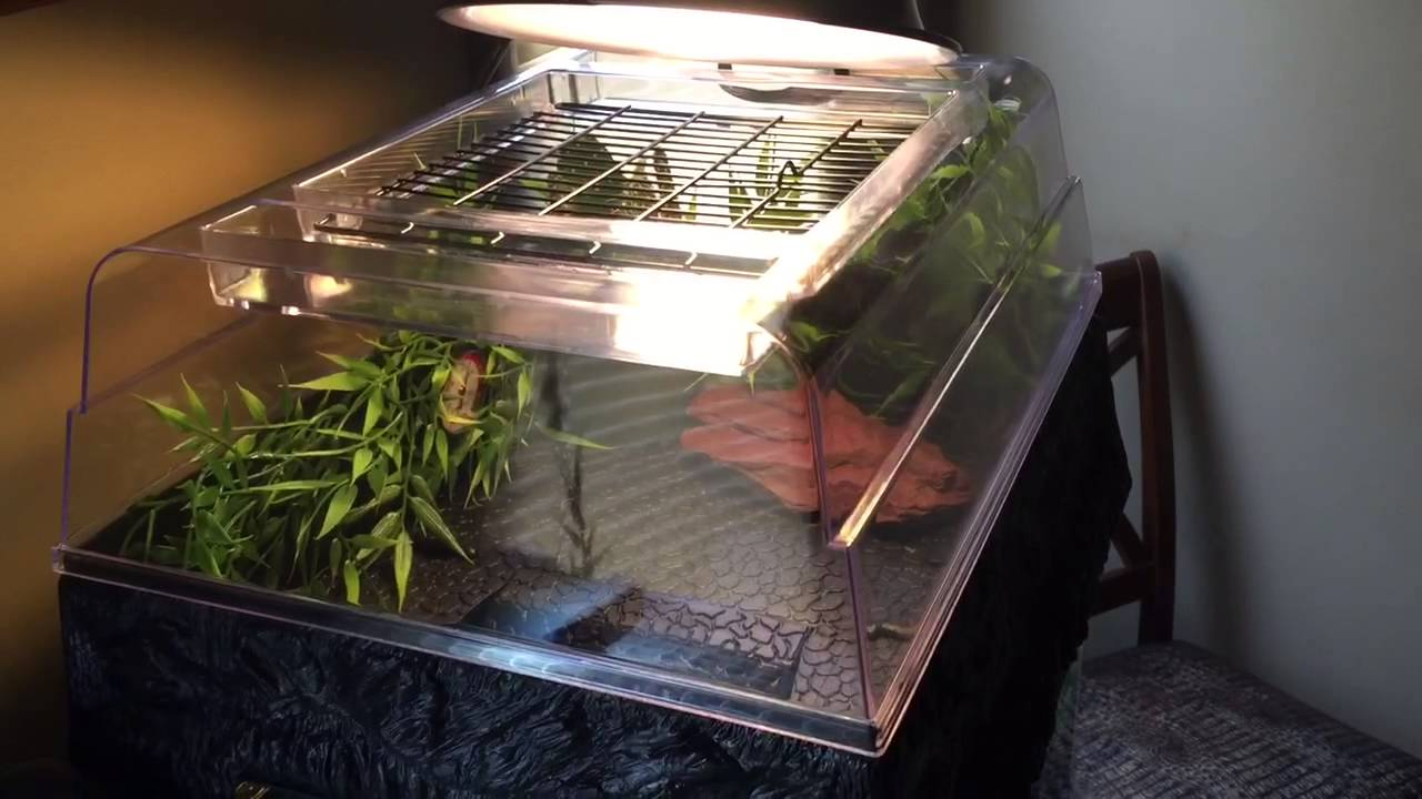 Red Eared Slider Turtle Tank29 Gallon YouTube