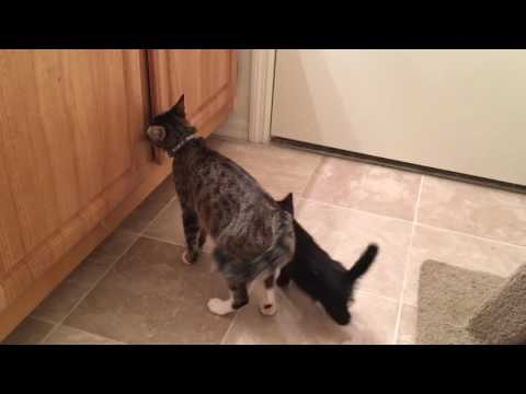 Kittens Have a Blast in the Bathtub! Hilarious :)