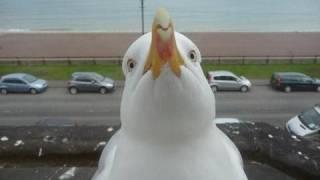 Biker hits seagull