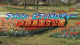 春に聞くアメニソングピアノ!sakura アメージンググレースその他。春の花畑淡路島 thumbnail