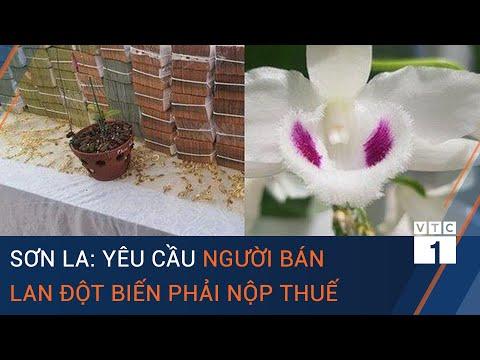 Cục Thuế Sơn La: Người bán hoa lan đột biến phải kê khai, nộp thuế | VTC1