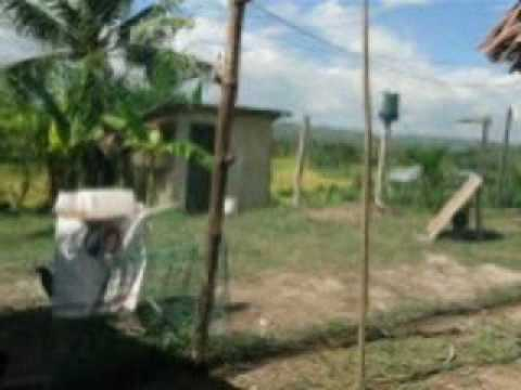Sabong 2010 part 1.mp4 by tanny