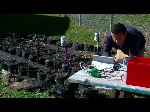 Urban gardening goes high-tech in Edmonton community
