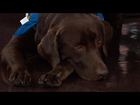 Founder Of National Institute For Diabetic Alert Dogs Weighs In On Service Dogs Controversy