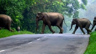 Elephants Cross The Road - Lands of the Monsoon - BBC