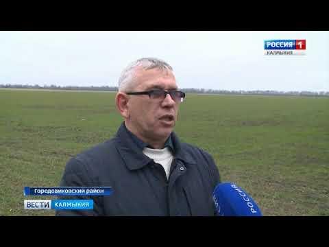 Хозяйства Городовиковского района готовятся к весенне- полевым работам