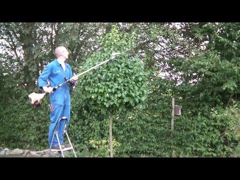 kugelbaum schneiden mit dem stihl kombisystem heckenschneider mit schaftverl ngerung hedge. Black Bedroom Furniture Sets. Home Design Ideas