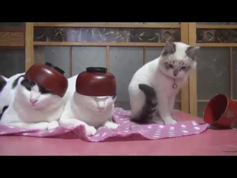 Funny Cats Doing Random Stuff #1