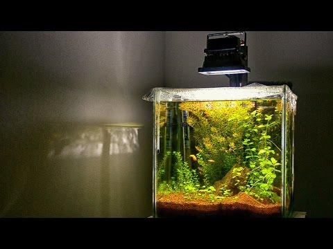 Low tech planted Aquarium | SECRET Revealed to have GREAT planted tank