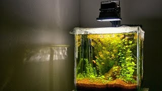 Low tech planted Aquarium | SECRET Revealed to have GREAT planted tank