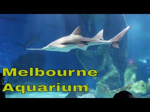 Sea Life Melbourne Aquarium Tour Australia 4K