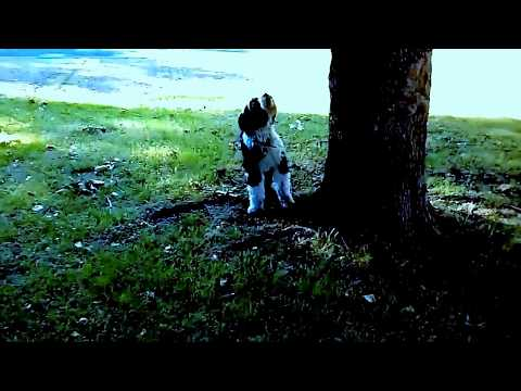 Funniest Dog  vs  Squirrel  amazing chase 3