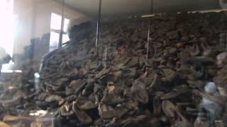 Auschwitz school trip (shoes)