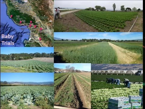 Design and management of organic strawberry vegetable rotations