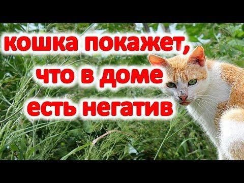Ваша кошка покажет, что в доме негатив и порча @Эзотерика для Тебя: Гороскопы. Ритуалы. Советы.