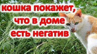 Ваша кошка покажет , что в доме есть негатив и порча   Эзотерика для Тебя Советы Приметы