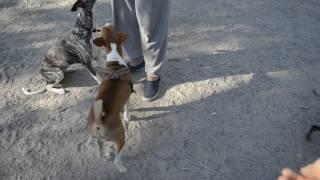 Голодные собаки сходят с ума на дрессплощадке)