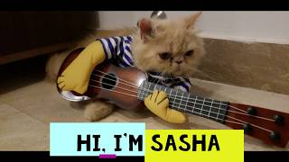 Sasha-The Cutest Cat Compilations