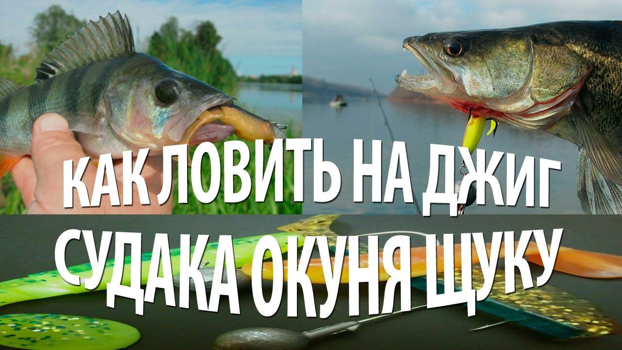 сибас рыба как ловить