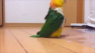Попугаи! Приколы про попугаев! Смешные попугаи online video cutter com