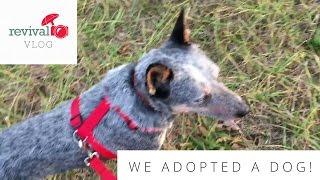 Revival Vlog: WE ADOPTED A DOG!