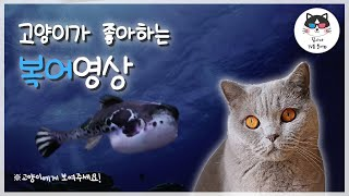 video for cat to watch! FAT FISH sound!