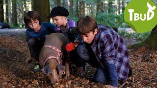 Trüffelschweine (Folge 36) | Tiere bis unters Dach | SWR Kindernetz