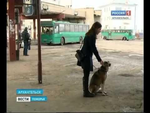 В междугородние автобусы вход с крупными собаками - запрещён!