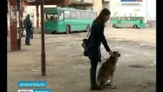 В междугородние автобусы вход с крупными собаками - запрещён!(, 2015-03-24T18:07:24.000Z)
