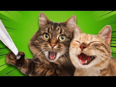 Dünyanın En Zeki 12 Kedi Irkı