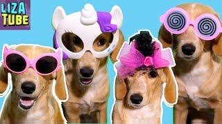 Что умеет моя собака Лиза и щенок Таффи Смешные собаки Приколы про собак Funny Dogs
