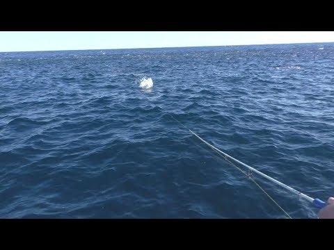 Offshore Surface Fishing Mayhem!