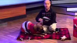 Pets on Parade - 12/19/15 - Peanut the rescue pup
